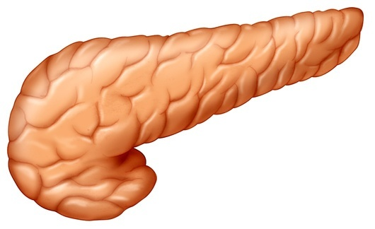 Digestive System together with 18 likewise 2777642 further S 26F Small Intestine Sam M additionally Digestive. on intestine circulatory system